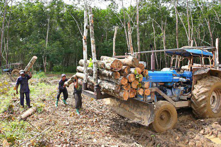 Ramassage rondins de bois